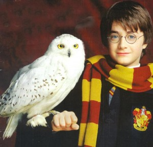 harry-potter-hedwig-300x287